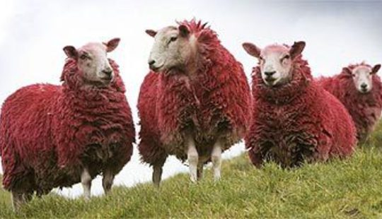 From http://static.guim.co.uk/sys-images/Lifeandhealth/Pix/pictures/2007/11/28/sheep1.jpg